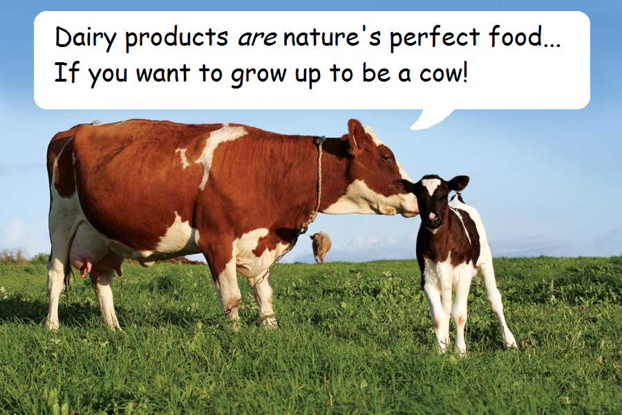 Dairy perfect food
